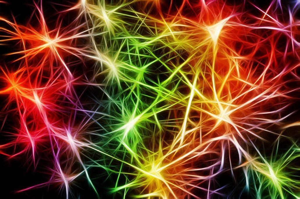 nerves hormones